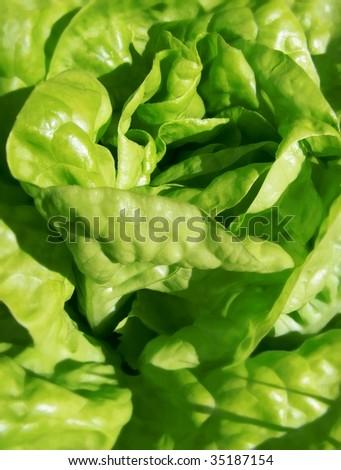 macro of lettuce leaves - stock photo