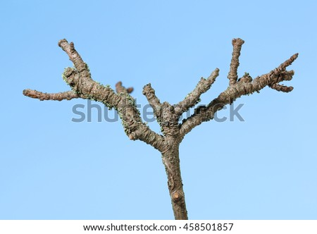 Macro of old dry rough branch over blue sky background - stock photo