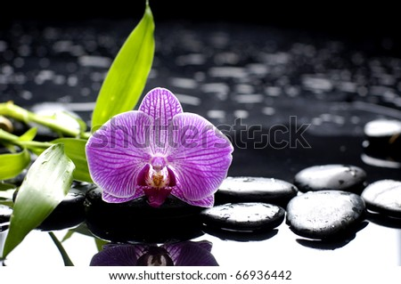 macro of orchid and green bamboo leaf with stone reflection - stock photo