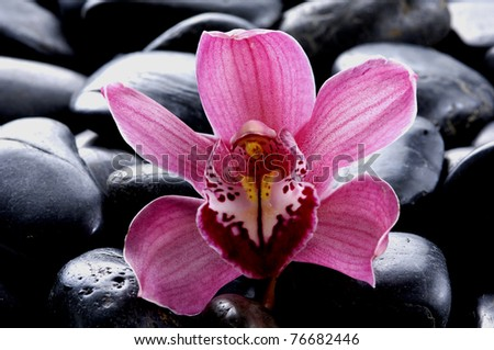 Macro of pink orchid and therapy stones on pebble - stock photo