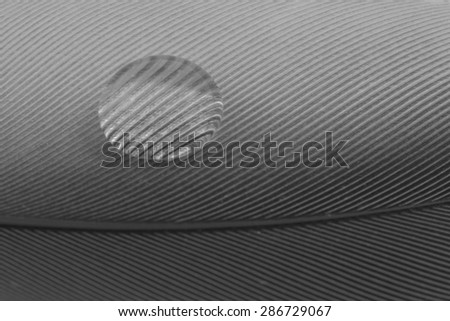 Macro of water drop on feather detail pattern - stock photo