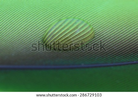 Macro of water drop on green feather detail pattern - stock photo