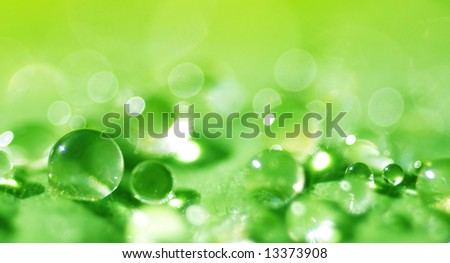 macro of water droplets on a green leaf (shallow DOF) - stock photo