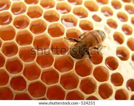 Macro of working bee on  honeycells - stock photo