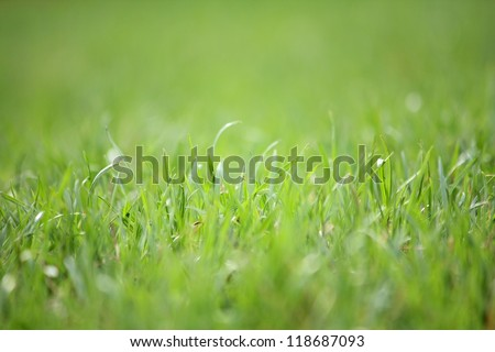 Macro photo of a green grass - stock photo
