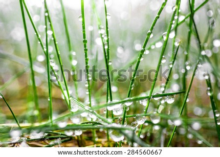 Macro photo of fresh green grass covered by water drops - stock photo