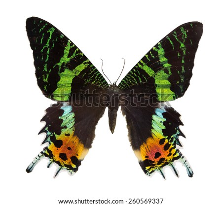 macro photo of green and orange butterfly isolated on white background - stock photo