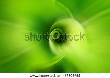 Macro photo of leaf green and fresh - stock photo
