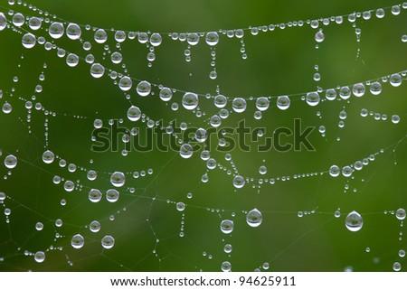 Macro photo of spiderweb covered with dew - stock photo