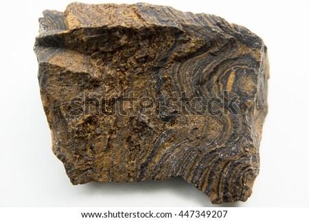 macro photo of Stromatolites isolated over white - stock photo