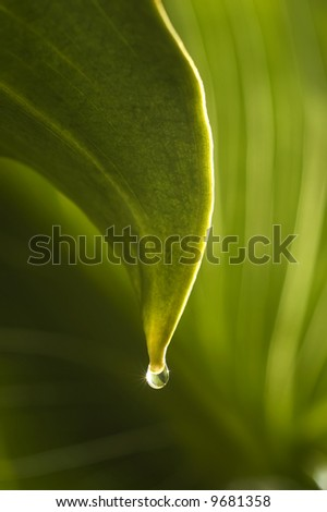 macro picture of a drop of water falling from a leaf - stock photo