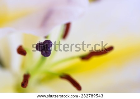 Macro shot of a anther in the middle of a lilly chalice - stock photo