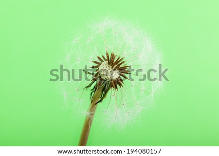macro shot of a dandelion over a green background - stock photo