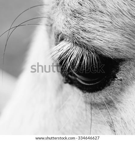 macro shot of a horse eye - stock photo