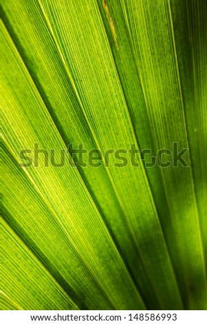 macro shot of a vibrant palm tree leaf - stock photo