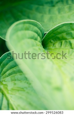 Macro shot of abstract green leaf with shallow depth of field. Abstract natural photo. - stock photo