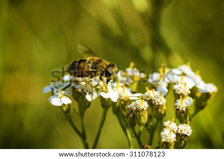 Macro shot of bee collecting pollen from flower in nature - stock photo