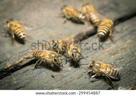 Macro shot of bees swarming on wood. - stock photo