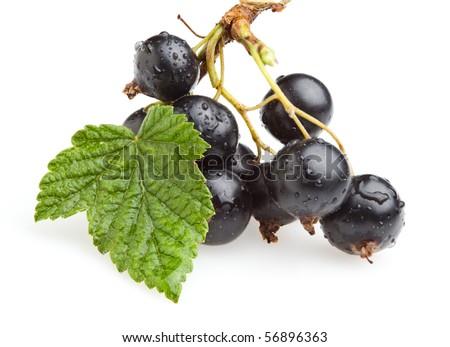 Macro shot of black currant branch - stock photo