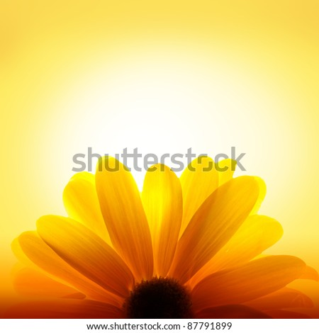 Macro shot of sunflower with sunset light in the background - stock photo
