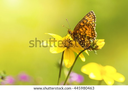 macro shot with orange butterfly on yellow flower - stock photo