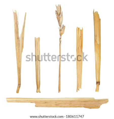 macro straw isolated on white background for design and construction, (with clipping path) - stock photo