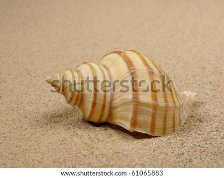 Macro studio shot of beautiful sea shell on a yellow sand - stock photo