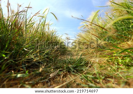 macro texture mat grass in summer in a field, view from below - stock photo