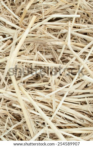 Macro texture of straw collected in a haystack in summer sunlight - stock photo
