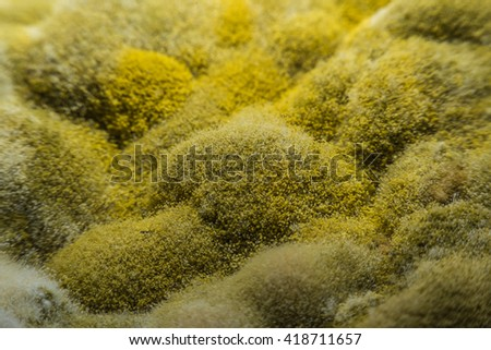 Macro view mold and fungus growing on food,Concept health and safety for food - stock photo