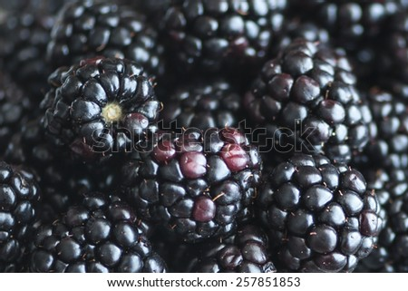 Macro view of a bunch of blackberries (Shallow DOF) - stock photo