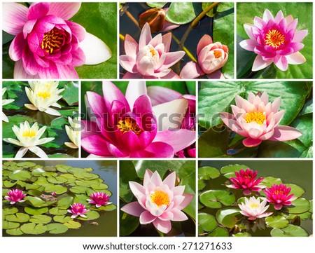 Macro view of beautiful fresh water lily, set - stock photo