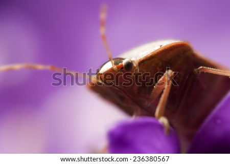 Macro view of bedbug - stock photo