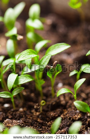 Macro view of sprout growing from seed, spring concept - stock photo