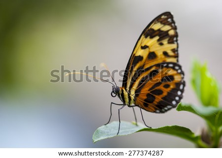 Macro view of vibrant orange, white, and black monarch butterfly on green leaf background, shallow DOF - stock photo
