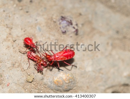 Macro view red insect on rock - stock photo
