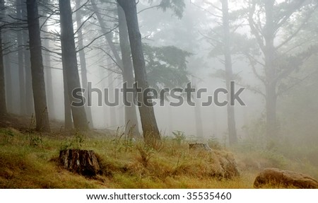 Madeira rainforest of laurisilva at the mountains, world heritage - stock photo