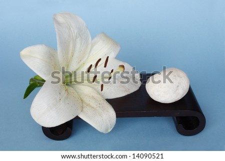 Madonna lily and white pebble in blue background - stock photo