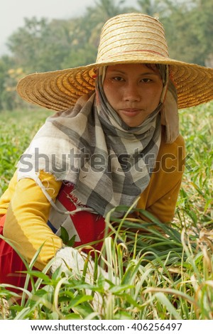 MAE HONG SON , NORTH THAILAND - APRIL 2, 2004 :  In the province of Mae Hong Son, north of Thailand close to Myanmar border. Burmese migrant workers harvesting onions in the fields - stock photo