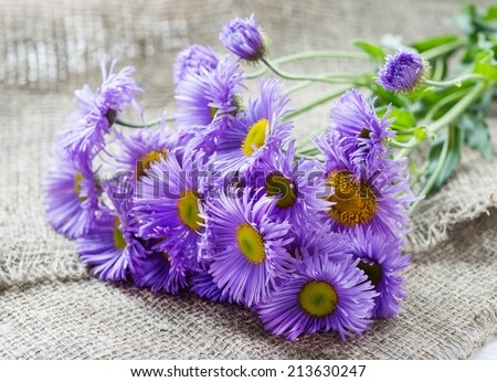 Magenta asters flowers over rustic background, selective focus - stock photo