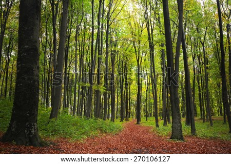 Magi trail in autumnal forest - stock photo
