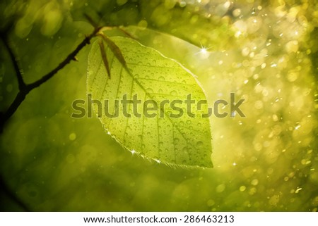 Magic blurry sunny beech leaf with raindrops and sunshine. Beautiful sparkle and bokeh added. Selective focus used. - stock photo