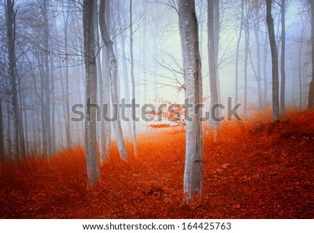 Magic colorful autumn beech forest. - stock photo