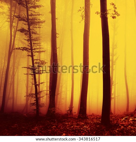 Magic fire red saturated autumn season foggy forest background. Over saturated yellow red forest trees background. - stock photo