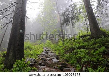 Magic forest. Babiogorski National Park. Poland. Tatry mountains. - stock photo
