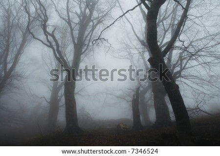 Magic forest of misty - stock photo