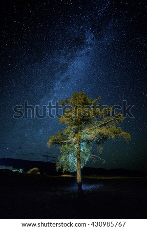 Magic night landscape with tree and Milky way and amazing starry sky. Altai region, Siberia, Russia - stock photo