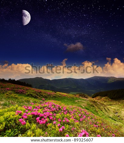 Magic pink rhododendron flowers under moon radiance - stock photo