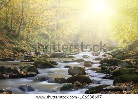 Magic river in forest, autumn landscape  - stock photo