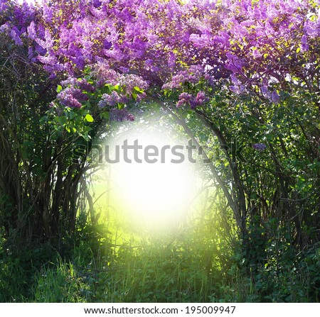 Magic spring forest  - stock photo